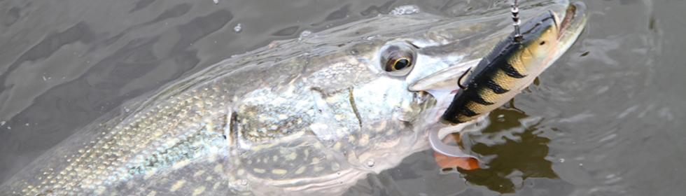 hauen kalastus